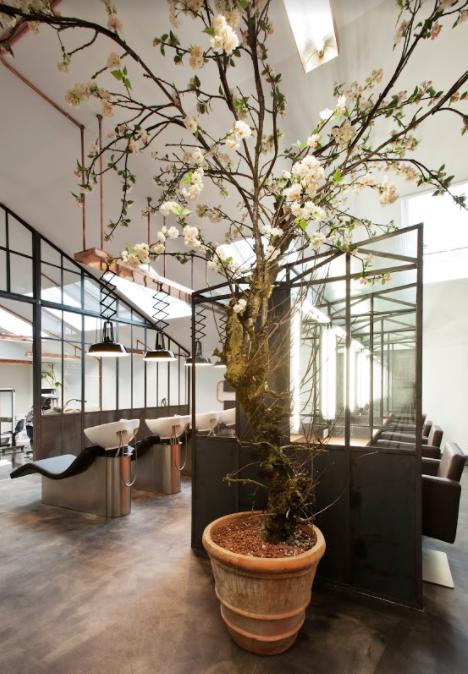 mogeen-blossom-tree-in-salon