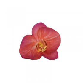 Spa Essentials Pink Orchid Decor Head